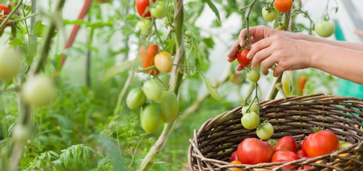 Growing your way to grocery store savings